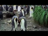 «Король пингвинов» (2012): Трейлер / Официальная страница http://vk.com/kinopoisk