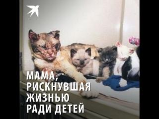 Мама, рискнувшая жизнью ради детей