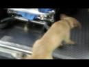 Люди думали, что на дороге лежит пьяница, и проходили мимо.Только пес пытался спасти...