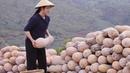 立秋了,终于把南瓜砌成墙,用来煮汤蒸排骨,怎么吃都香甜软糯【滇 35199