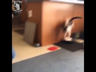 пушистые хулиганы