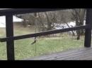 Белка пытается залезть в кормушку для птиц