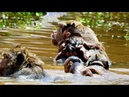 Million Dangerous! Brutus JR Nearly drown into water cos jill Baby try to breath out Look baby
