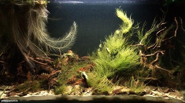 Конкурс дизайна биотопных аквариумов JBL 2014 TMFjLcNKAMU
