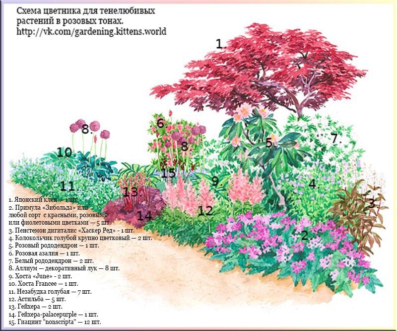 Схема цветника с тенелюбивыми