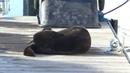 Otter Has a Serious Itch || ViralHog