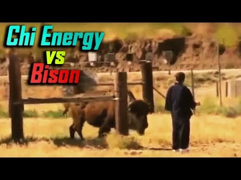 Chi Energy Master Knocks Out a Bison? - No Touch Martial Arts Reality - Part 5
