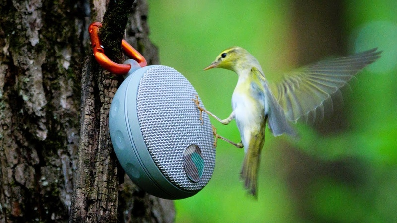 Привлечение птиц на голос: как не навредить
