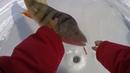 ОКУНИ МОНСТРЫ ОТОРВАЛИ ВСЕ БАЛАНСИРЫ Горбачи окуни и судак в подводном лесу Балансир для коряг