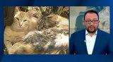 Вести.Ru: Зоозащитнику грозит реальный срок за спасение замурованных кошек