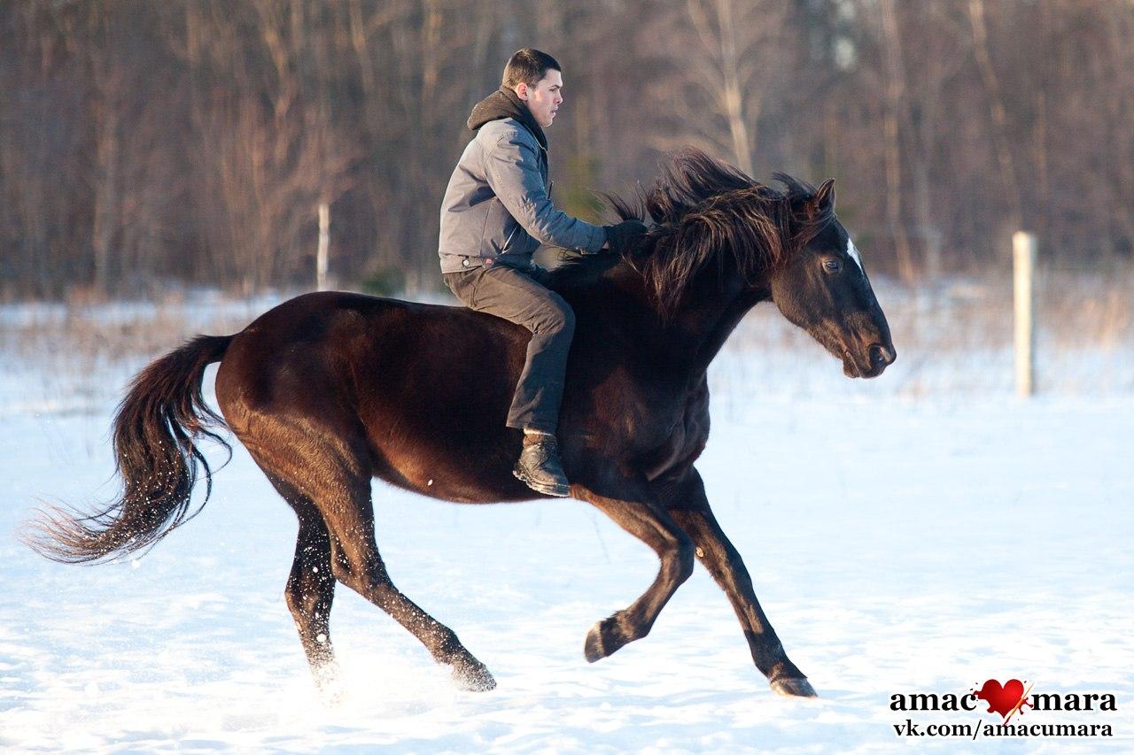 10 конных клубов в Петербурге