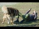 Чемпионат Украины по программе СС (2013). Навык 1. Работа в наморднике.