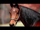 Интересные факты - Лошади
