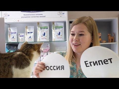 Кошка угадывает итоги матча ЧМ 2018