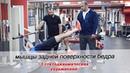 СТАТОДИНАМИКА. Упражнения на мышцы задней поверхности бедра