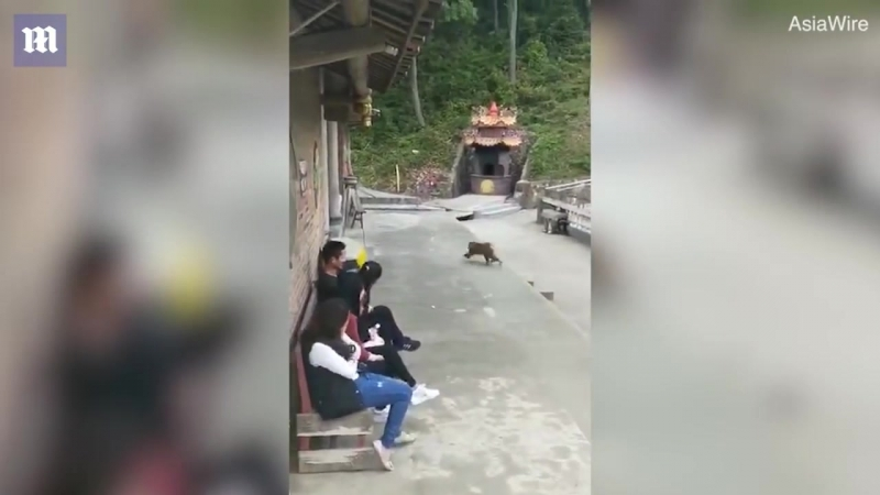 Мгновенная карма. В Китае макака отомстила обидевшему ее туристу