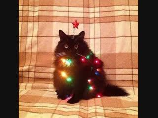 Женские Хитрости (vk.com/womantrlck) - коты и новый год