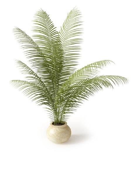 3 D Растения