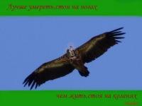 Сияние Звезды, 22 октября , Дагестанские Огни, id180250204