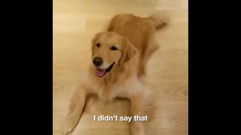 When you don't understand something but you give it a go anyway..Dog Struggles To Follow Commands