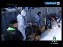 Житель Ноябрьска хранил во дворе больше килограмма наркотиков