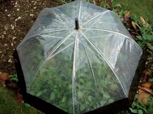 10 отличных советов для тех, у кого есть дача У нас под рукой всегда найдутся вещи, которые можно креативно приспособить на даче и с помощью которых решить некоторые садоводческие проблемы. 10