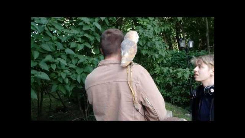 🌰🌲🎈Сова сипуха на съемку - Аренда животных - 8 916 - 702-11-08