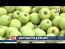 В Крыму готовятся собрать рекордный за последние десять лет урожай яблок