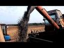 Уборка подсолнуха 2017 сорт HC X 26749 Сады Украины СельхозТехника ТВ