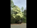 Что будет если ударить экскаватором по цветущему дереву Ладан во время засухи Милвилл Нью Джерси 08 мая 2018 года