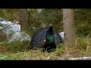 Дикая природа Германии 03 Шварцвальд Познавательный животные 2011