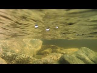 nord pearl karelia Топозеро съемка под водой
