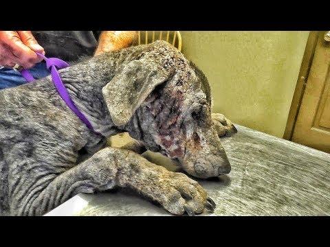 Vet Ranch на русском - Человеческая Безответственность / Disgusting Case of Pure Neglect