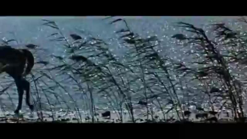 Песня Яшки цыгана Моя жизнь не вошедшая в фильм Неуловимые мстители