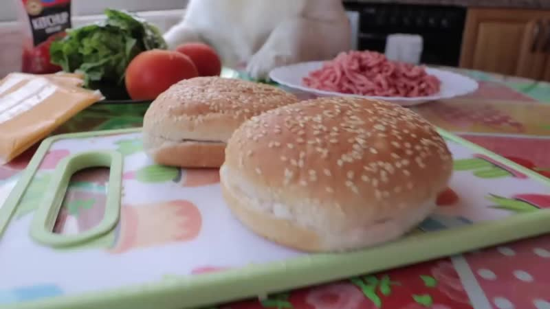 Funny Dog Makes Hamburger- Golden Retriever Puppy Bailey