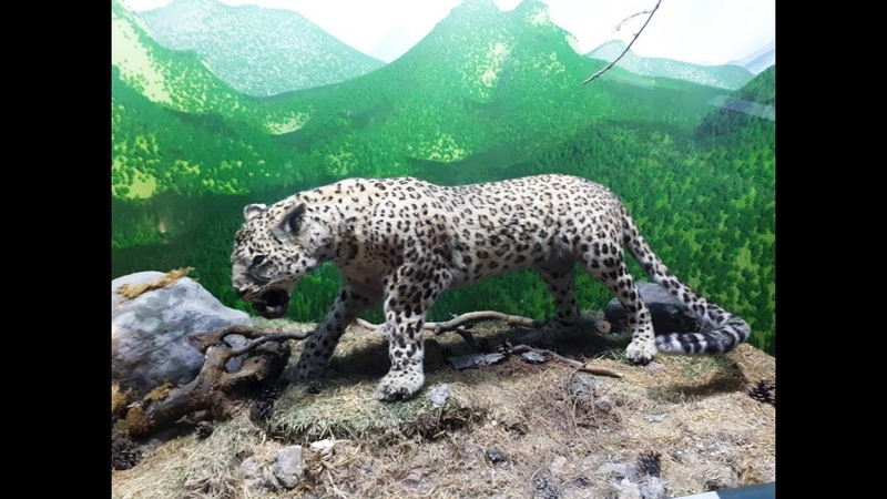 Ankara Tabiat Tarihi müzesinden görüntüler (slayt)