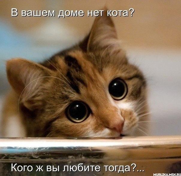В вашем доме нет кота?