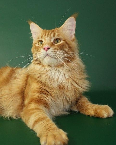 Каталог вяжущих котов KSahObYEGjs