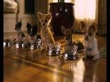 Крошка из Беверли-Хиллз 2 (лучший трейлер 2010).wmv