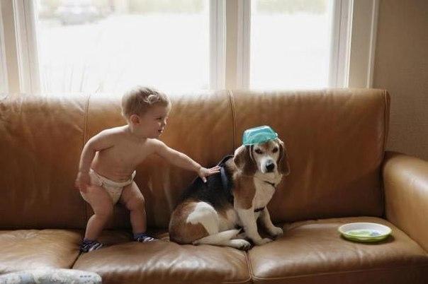 3-летний мальчик написал письмо своей умершей собаке и...получил ответ: ↪ И это были не его родители.