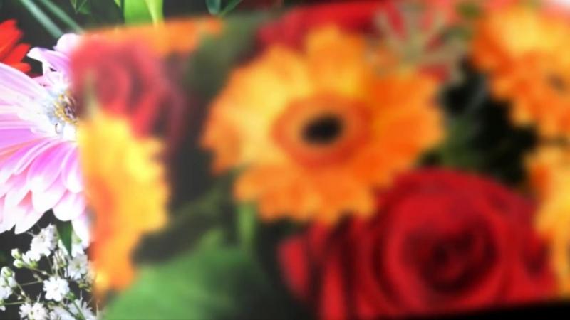 ЦВЕТОК РАДОСТИ и СЧАСТЬЯ ГЕРБЕРА - калейдоскоп цветов и оттенков