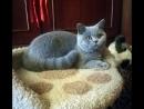 Беттичка Любимая кошечка моя