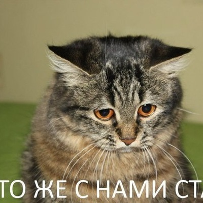 Artem Xxx, 31 августа 1984, Самара, id197027139