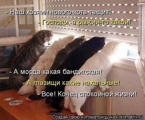 http://cs425528.vk.me/v425528313/5bb2/LeJ8fQILas0.jpg