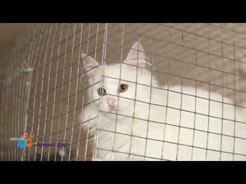 Белые кошки в приюте