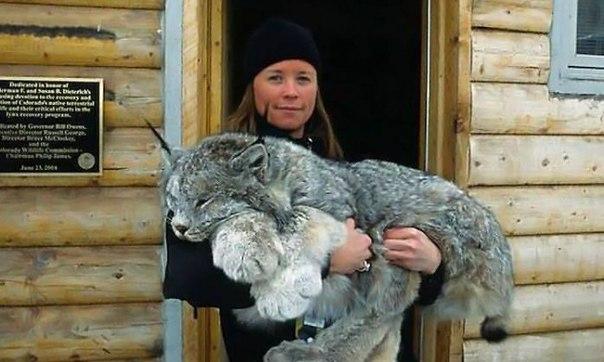Аааа вот это лапы у рыси! 😻 30 фактов о животных, которые поднимут вам настроение: ↪