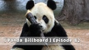 Panda Billboard Episode 82 iPanda