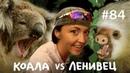 Ленивец Тупой против Дрища Всё как у зверей 84