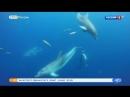 В Сочи открылись курсы по оказанию первой медицинской помощи дельфинам