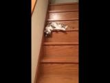 Очень ленивый кот. Видео приколы
